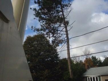 014-Tree-Services-East-Coast-Tree