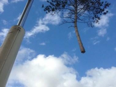 024-Tree-Services-East-Coast-Tree