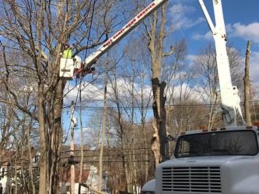 028-Tree-Services-East-Coast-Tree