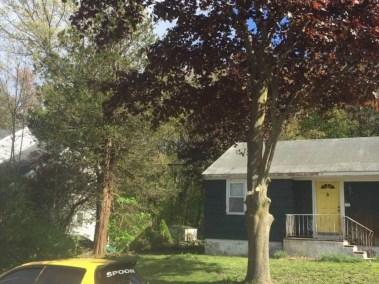 031-Tree-Services-East-Coast-Tree