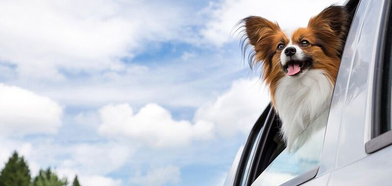 Car Safety Tips for Your Dog