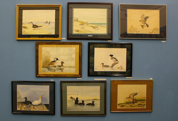A selection of Mr. Puleston's Long Island bird paintings.