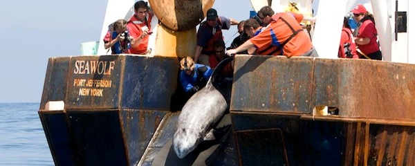 Roxanne was released by the Riverhead Foundation off the coast of Hampton Bays on Wednesday.