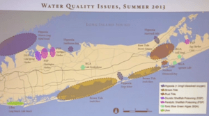 This summer's water quality issues on Long Island | Dr. Chris Gobler