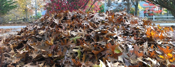 Thinking about leaving your leaves at the curb in Southampton? Think again.