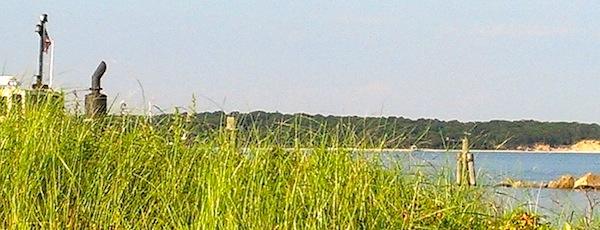 Peaking through the seagrasses...