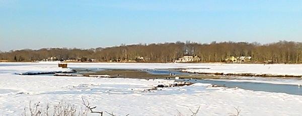 Mud season birds on the clam flats, Downs Creek