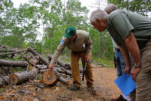 Henry's Hollow Southern Pine Beetle