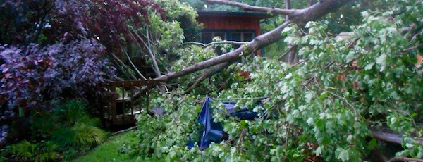 Shelter Island storm tree down
