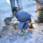 SoFo Horseshoe Crabs