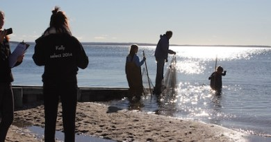Seining Friday morning at Veterans Beach