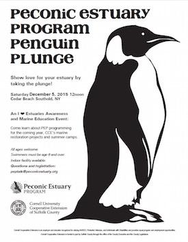 PEP Penguin Plunge