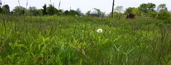 Custer's Meadow, Southold
