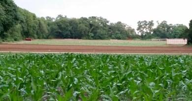 Summer field striations