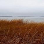 December fog, Flanders Bay