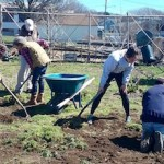 The Montauk Community Garden crew at work.