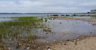 A little green on Flanders Bay.