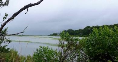 Halls Creek, Cutchogue, Monday afternoon.