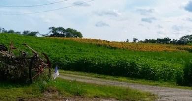 August Roadside, Aquebogue