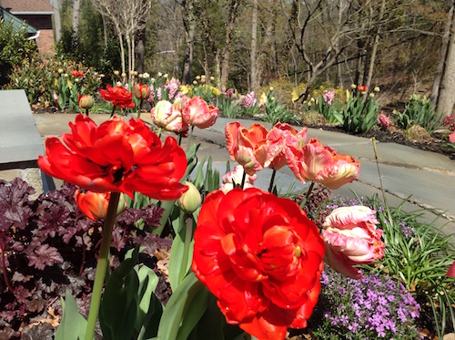 An assortment of tulips brightens this garden in late spring.