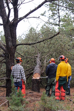 Chris DiCintio's Wildfire Power Saws class looks over their work felling a tree in Pine Meadows County Park.