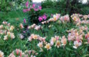 If you are a take charge person who loves to plan, you probably prefer the look of flowers with warm hues, such as Alstroemeria 'Inca Ice' (shown in foreground).