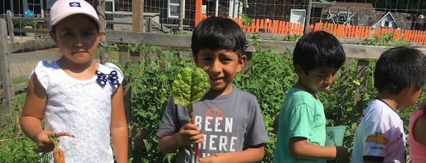 Kids in the garden at the Bridgehampton Child Care & Recreation Center