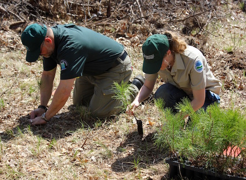 John Pavacic of the Central Pine Barrens Commission and Molly Hassett of the DEC plant saplings at Hubbard County Park May 3.