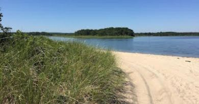 Accabonac Harbor has some of the most pristine marshlands on the East End