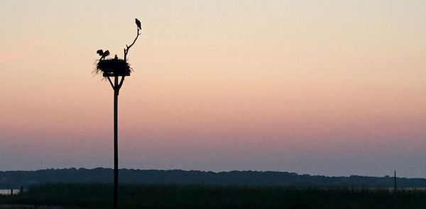 Osprey wake-up call