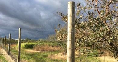 Weird Weather Over Wickham's Peaches, Cutchogue