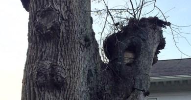 Memory Tree, New Suffolk