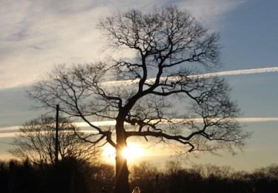 Winter tree, Jamesport