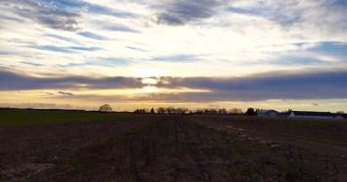 Winter Farm, Riverhead