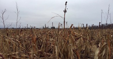 Winter field, Northville