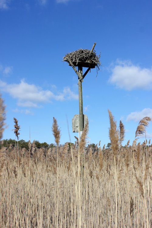 An osprey platform near the boardwalk through the Fairy Dell.
