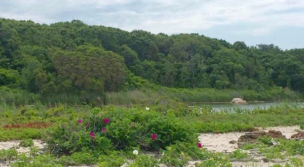 At Inlet Pond County Park, Greenport.