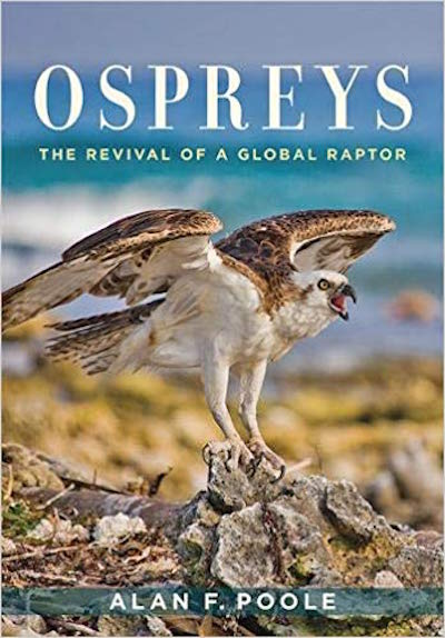 """NFAS Lecture: Alan Poole discusses """"Ospreys, The Revival of A Global Raptor"""" at Poquatuck Hall"""