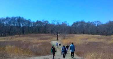 Hikers in the meadow at Mashomack Preserve on Shelter Island Sunday | Jeanne Merkel photo