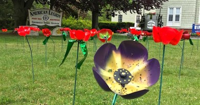 Poppies at the Southold American Legion
