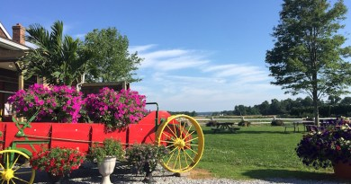 At Bayview Farms, Aquebogue