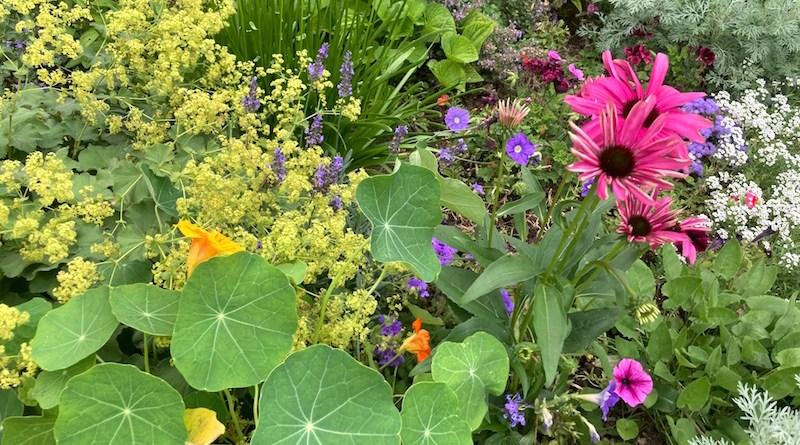 Summer's garden.