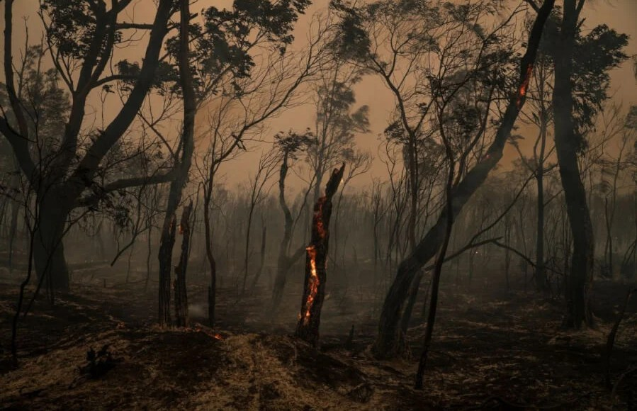 Europe: Devastating forest fire and great drought