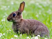 Bunny Ebola, Ebola 2020 in rabbits, ebola news america, california ebola, rabits dying eboal; The Eastern Herald News