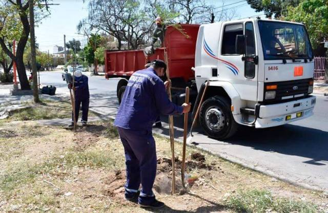 The Municipality started the plantation of jacarandas to increase the forest heritage on Independencia avenue
