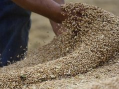 Sudan announces the arrival of 50,000 tons of US aid wheat