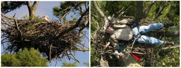 eagle nest collage