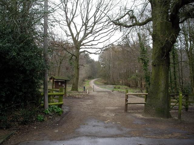Stoke park woods