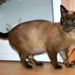Titch - Missing Cat