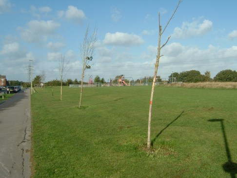 Dead, dying and vandalised trees at Dowds Farm Park, now to be replaced by Hedge End Town Council